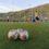 Calcio a 5: il Five to Five vince e vola in testa, bene il settore giovanile ascianese